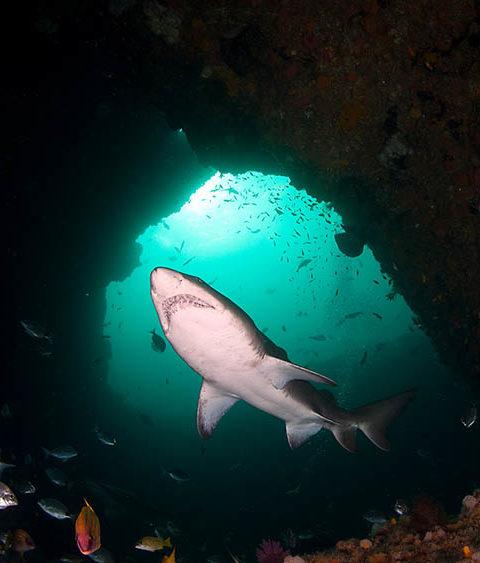 Aliwal Shoal Diving