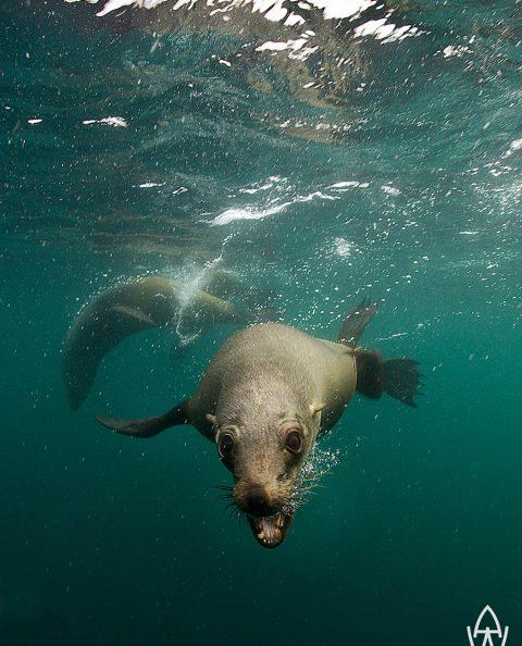 Cape Seals