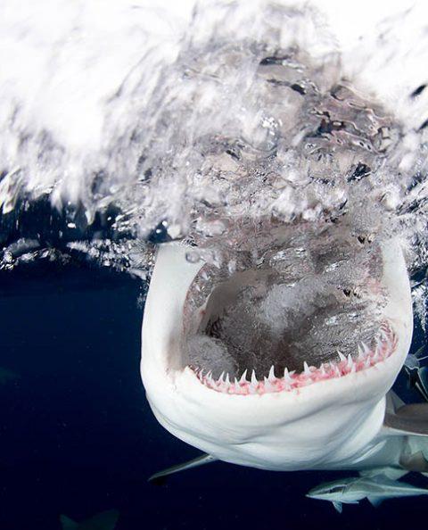 General Sharks