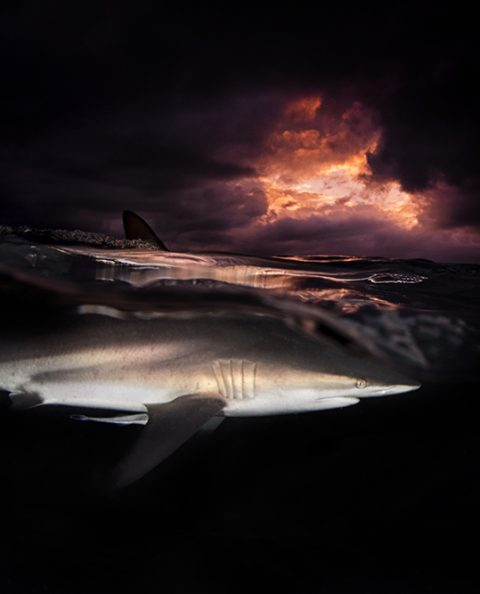 Exclusive Shark Prints - Limited Edition